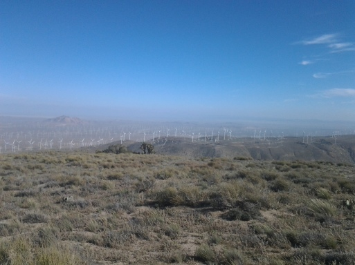 Windmills everywhere